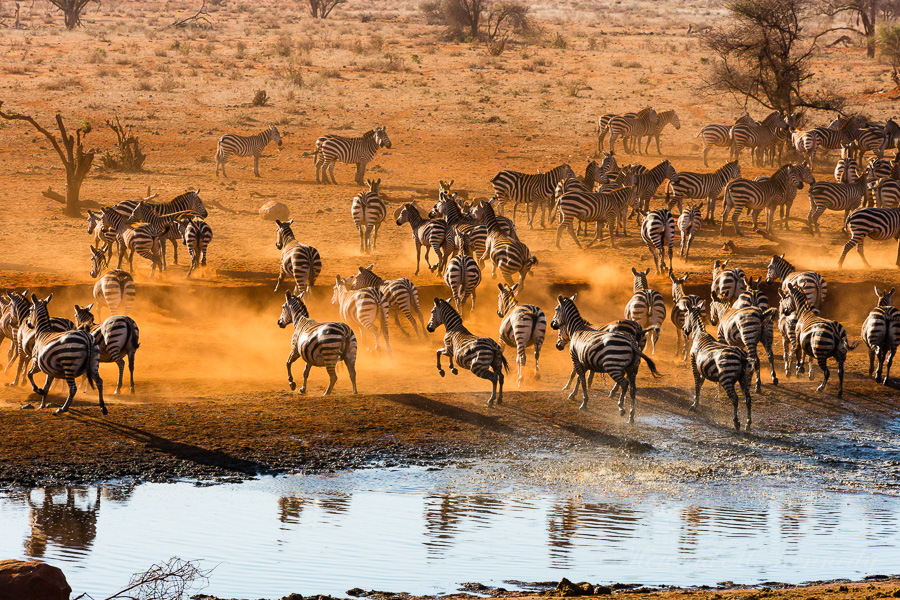 Zebra at Ngutuni Waterhole